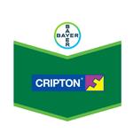 cripton